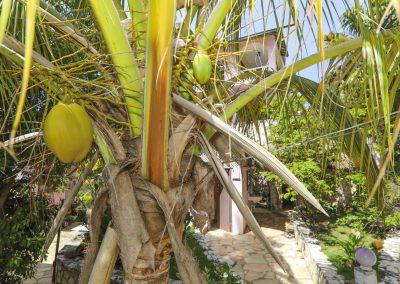 HSH - Coconut-min