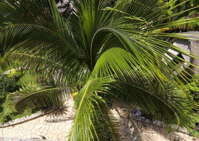 HSH - Palm-min